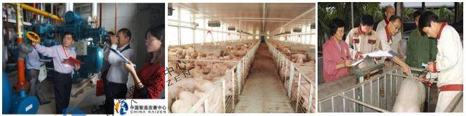 畜牧行业-精益生产智造改善中心案例